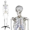 YA/L011 Human Skeleton Model 180cm Tall